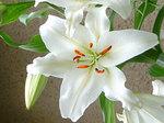 flower2_00670large.jpg